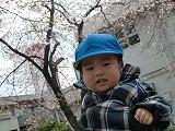 桜のお花に囲まれて~3